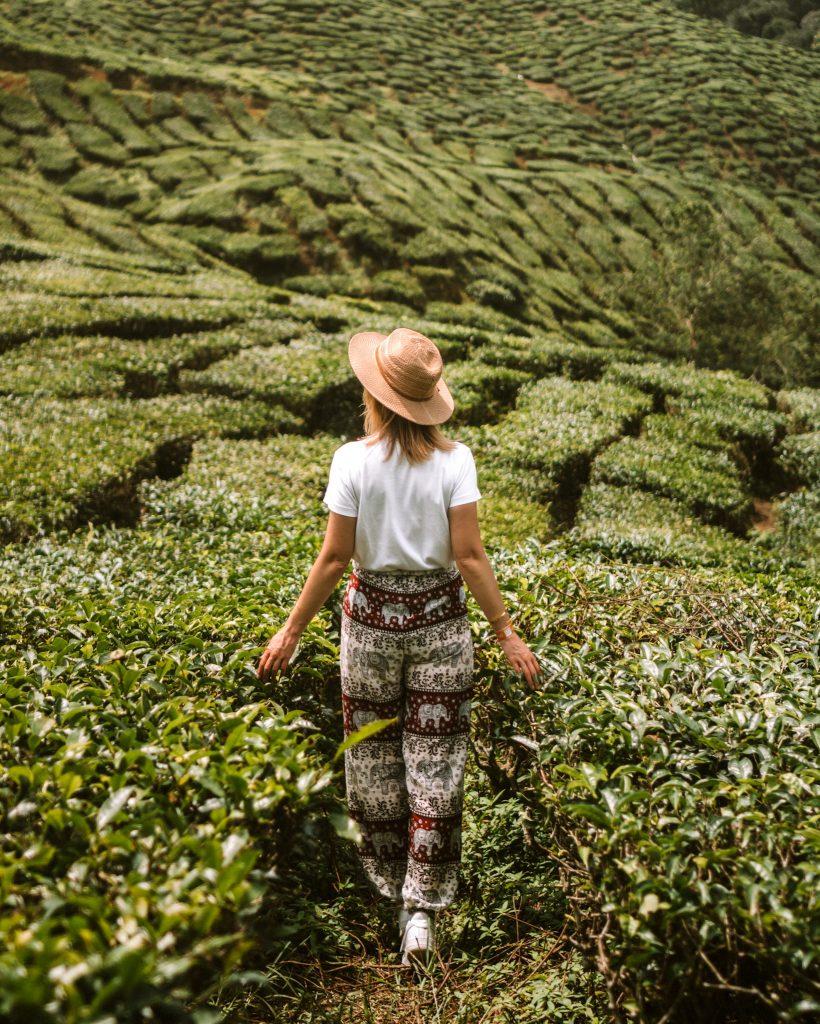 Malaysia Itinerary - Cameron Highlands